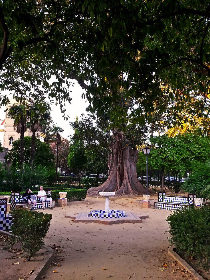 Jardines de Murillo. Sevilla   #sevilla #jardines #walkingtours #andaluciatours #andalusiaguidedtours #privatetours