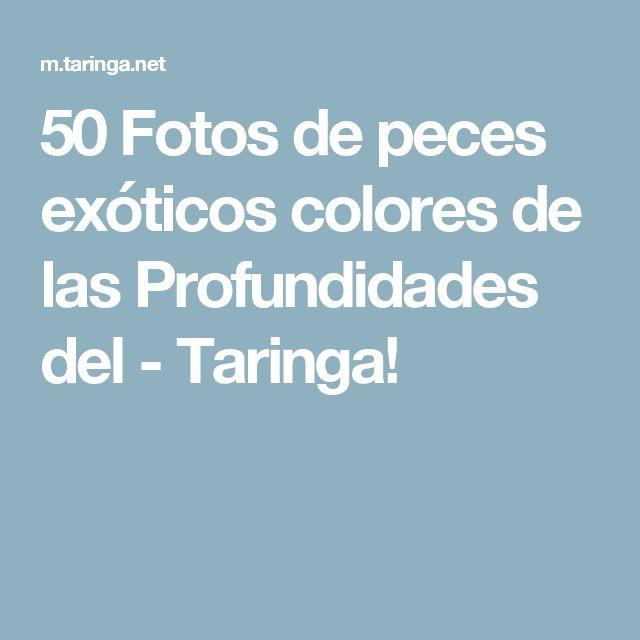 50 Fotos de peces exóticos colores de las Profundidades del - Taringa!