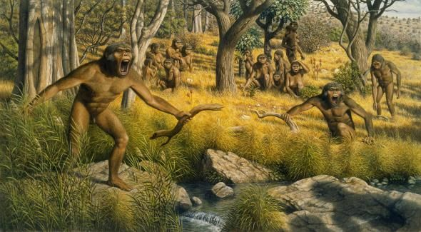 Picture of painting depicting Australopithecus robustus defending territory
