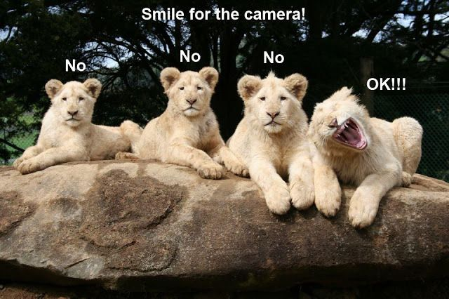 funny pics of animals | 30 Funny animal captions - part 12 (30 pics), animal memes, animal ...