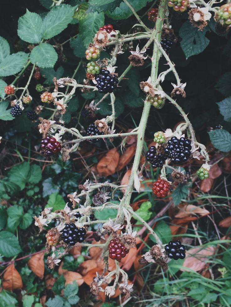 An autumn to do list http://ift.tt/2jPylFg