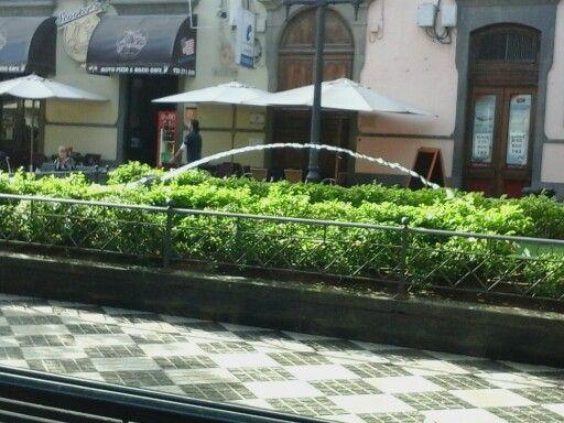 Plaza la rana