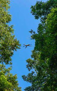 Fliegende Affen im Nationalpark Tortuguero