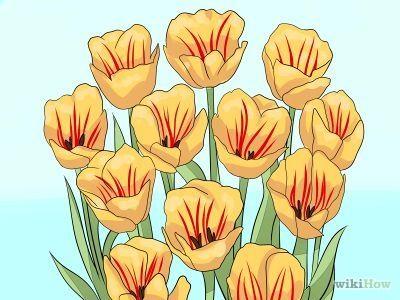 Cómo plantar y cuidar tulipanes -- vía es.wikiHow.com