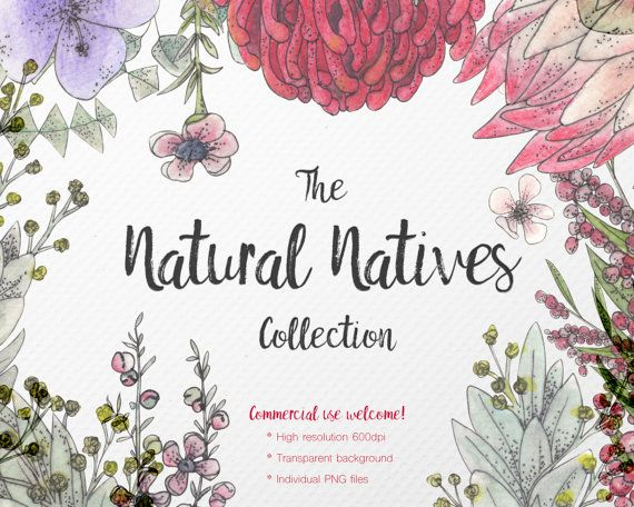 Watercolor Clipart  Natural Natives Collection  by JessicaOxleyAI