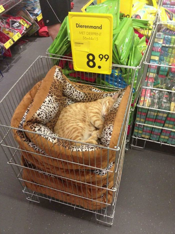 Just A Chilling Cat Giving Zero Cares In A Local Store