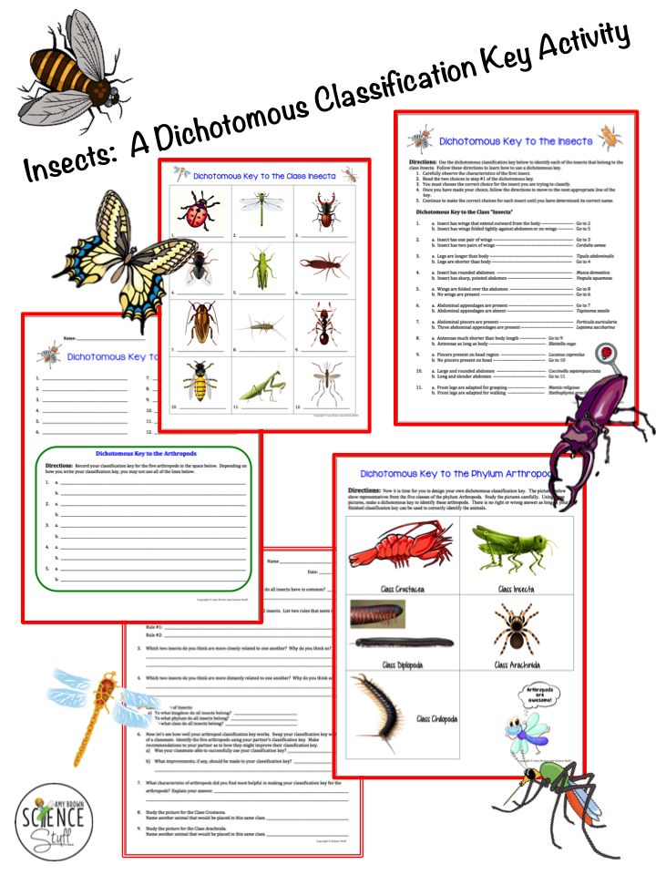 insects and arthropods dichotomous key activity classification and taxonomy invertebrates. Black Bedroom Furniture Sets. Home Design Ideas