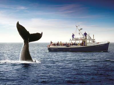 Go Whale Watching!   You can find great Whale Watching tours all over Nova Scotia, with some of the more populars spots being:   The Cabot Trail, The Bay of Fundy & the South Shore  http://www.novascotia.com/en/home/thingstoseeanddo/touroperators/boattourscharters.aspx?ops=c29ydD1OYW1lJmRpcj0wJnBnPTEmcHM9MjA_