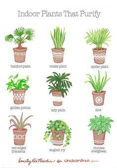 ohdeardrea: indoor plants that purify guide by ohdeardrea, via Flickr
