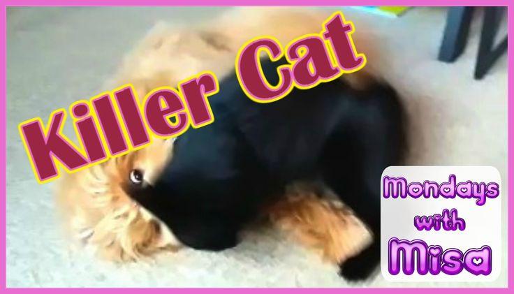 Cat attacks dog |Mondays with Misa