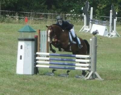 Amazing beginners horse. 15.2hh 16 y/o gelding for sale. This horse is the perfect beginner horse! Has taught many kids the r