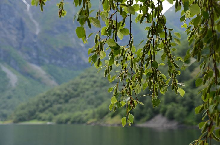 The colours of the fjords and the nature around are a nice combination of blue and green.