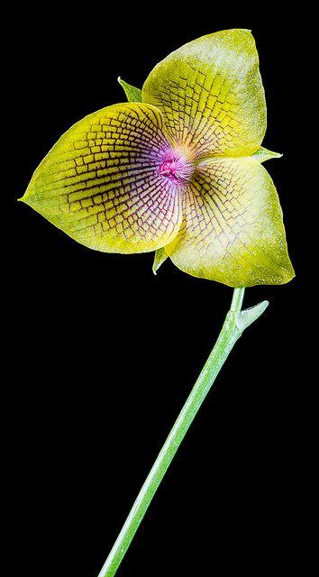 orquideas de Antioquia Colombia