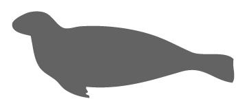 WWF - Saimaannorppa on yksi maailman uhanalaisimmista hylkeistä. Saimaannorppia arvioidaan olevan nykyisin noin 310. Vuoden 2012 poikaslaskennoissa löydettiin 60 kuuttia. Tutkijat ovat päätelleet, että karkeasti puolet emon vierottamista eli pesäpoikasajan yli elossa selvinneistä saimaannorpan kuuteista kuolee kalaverkkoon ensimmäisen elinvuotensa aikana.