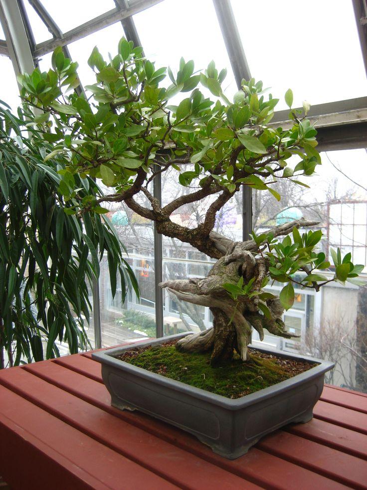 Avocado Tree... I have an avacado addict! Garden