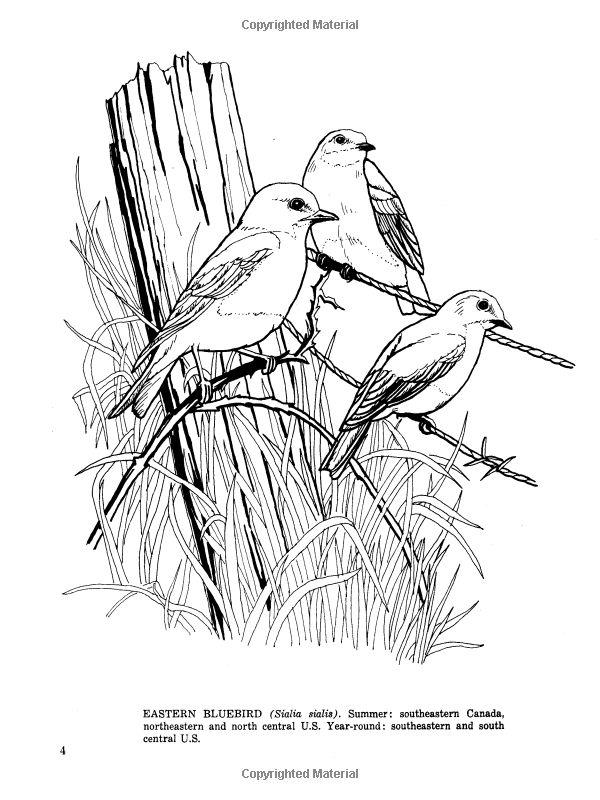 Fifty Favorite Birds Coloring Book Dover Nature Lisa Bonforte 9780486242613 Amazon Books