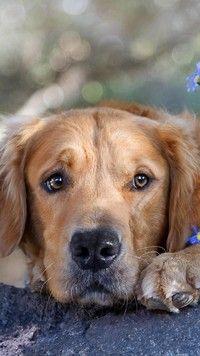 Smutny pysk psa