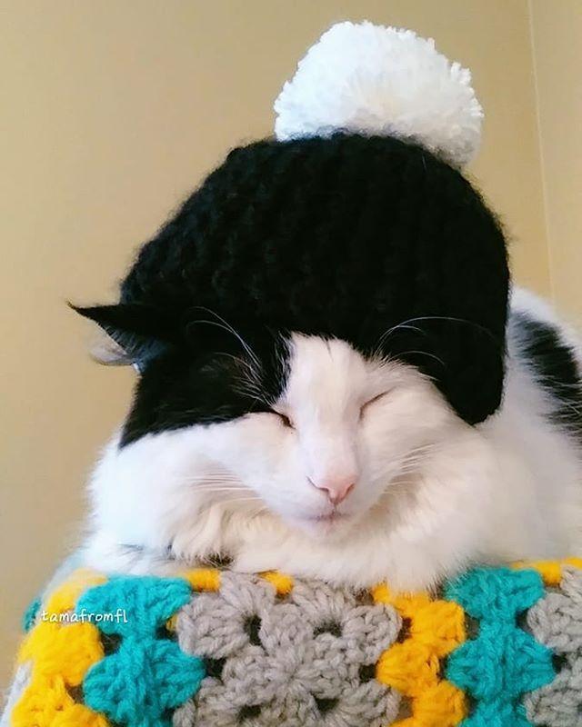 Let's back to sleep again #fridayfeeling She is  recovering from #softtissuesarcoma cancer surgery #TEAM_TAMA ฅ #dailycat#cat #rescuecat #againstcancer #cancer#adoptdontshop  たまもっかい寝よぐーぐー  #ストームからたまを守る魔法の編み物 #花金  病気のお友達も早く元気になりますように彡. #悪性腫瘍に負けない = ( '-' = )ネコパンチ たくさんの元気玉もありがとう