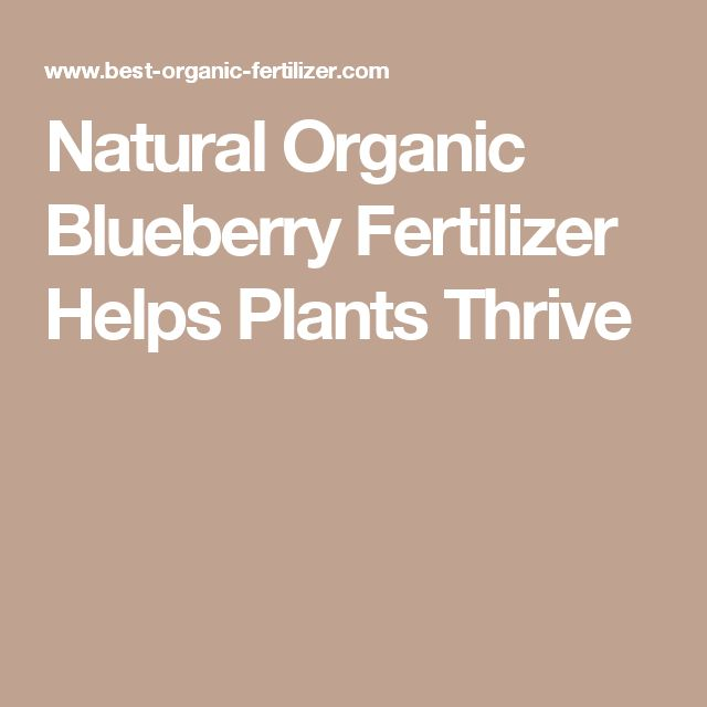 Natural Organic Blueberry Fertilizer Helps Plants Thrive