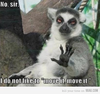 Lemur no move it move it...