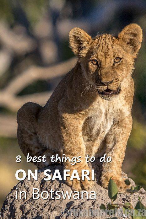 8 best things to do on safari in Botswana's Okavango, Chobe, Kalahari and Makgadikgadi