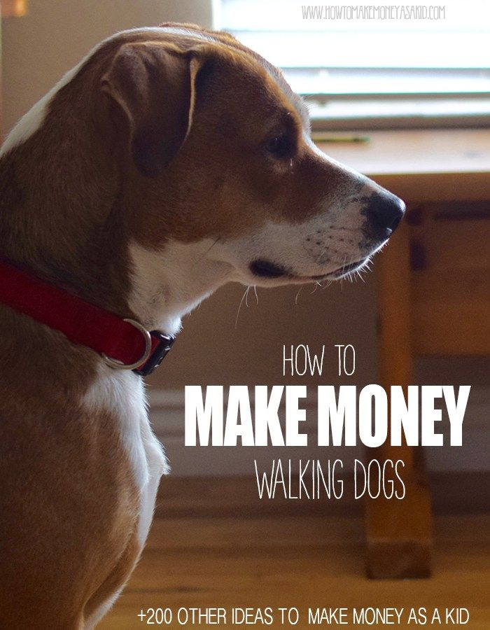Make Money Walking Dogs As A Kid or Teen – How To Make Money As A Kid