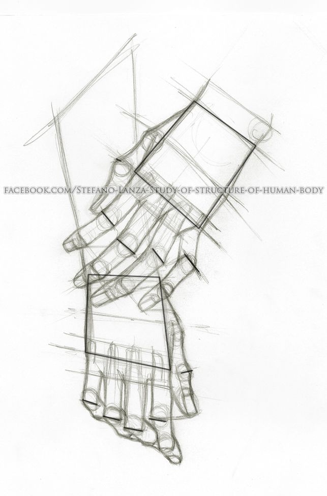 https://www.facebook.com/Stefano-Lanza-Study-of-structure-of-human-body-1479159998770051/?ref=bookmarks #hands #hand #anatomy #draw #drawing #art #pencil #human body