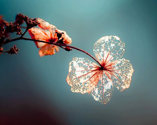 Don't let them think that we've broken down;  That we've cracked up.  We merely dropped leaves,  For a further spring.  ~Rumi