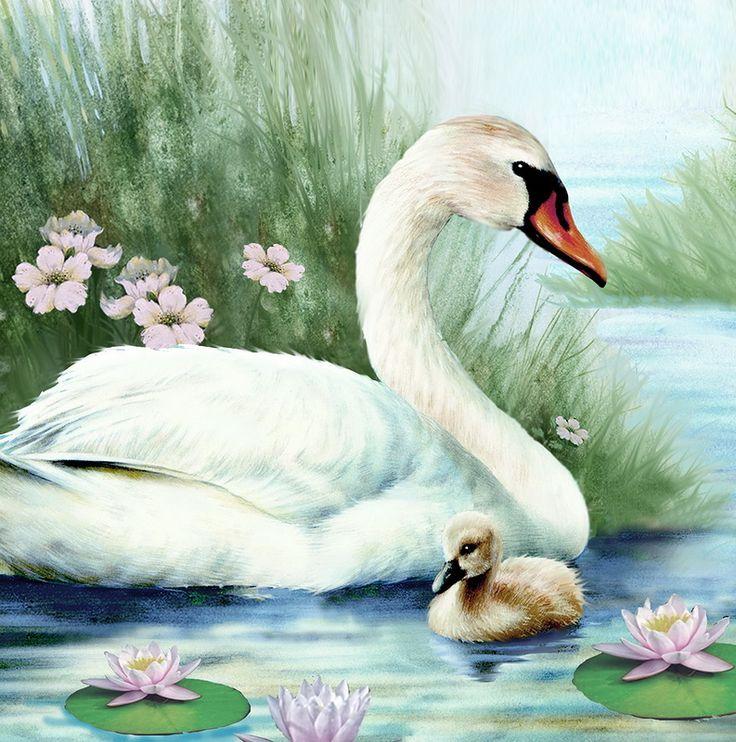 Сиреневых, картинки лебеди для детей