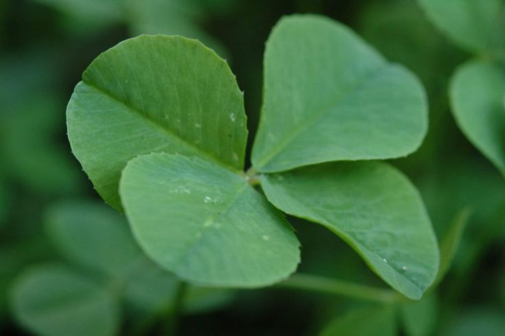 'Green' Recipes for St. Patrick's (or any) Day | Two Kooks In The Kitchen