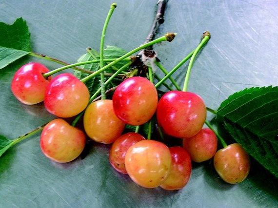 Sapore: retrogusto di ciliegia durone #flavour #durone #cherry