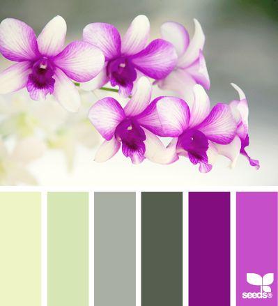 orchid hues