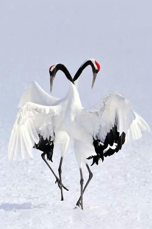 Birds dancing