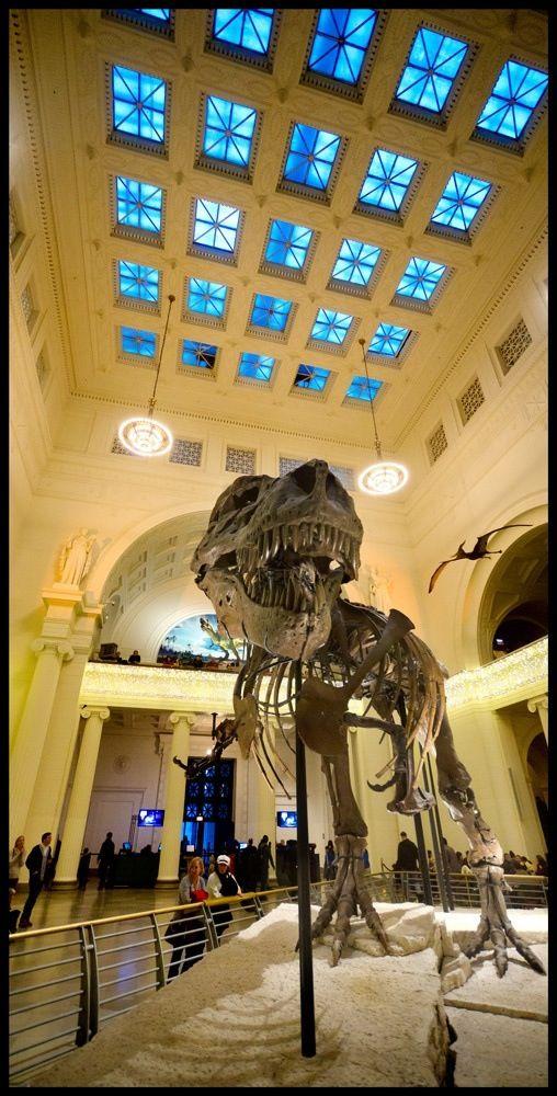 Dinosaur Skeleton in Chicago Natural History Museum