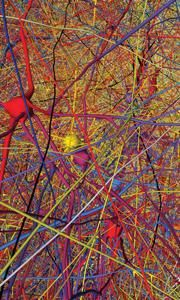 Map of the brain showing neuron connections.....European researchers chase billion-euro technology prize : Nature News