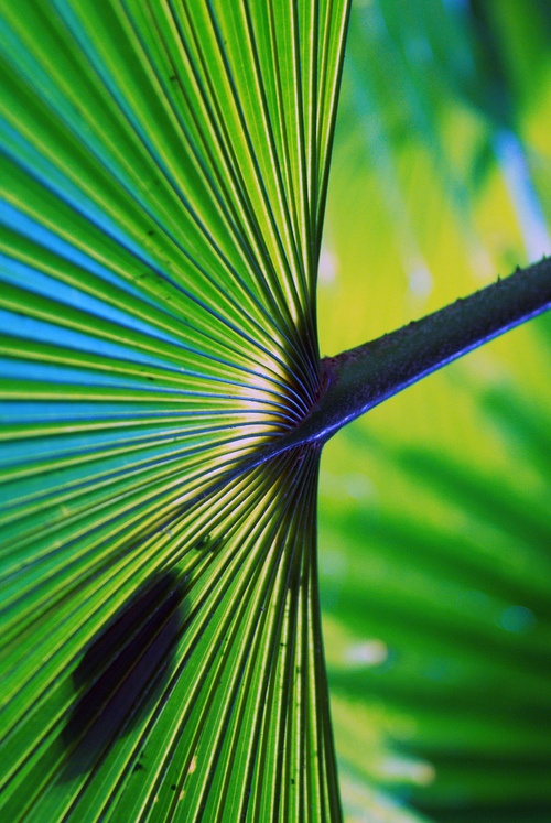 Tropical Leaf: Green Palms, Tropical Leaf, Photography Nature, Posts, Tropical Leaves, Tropical Islands, Green With Envy, Tropical Life