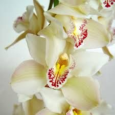 las flores mas lindas fotos - Buscar con Google