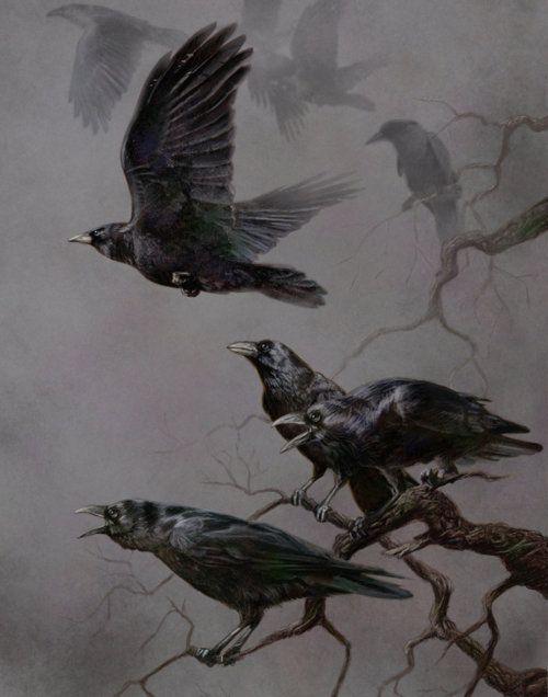ravensCrows Ravens, Art Crows, Little Birds, Dark, Murder Mysteries, Image, Blackbird, Black Birds, Beautiful Birds