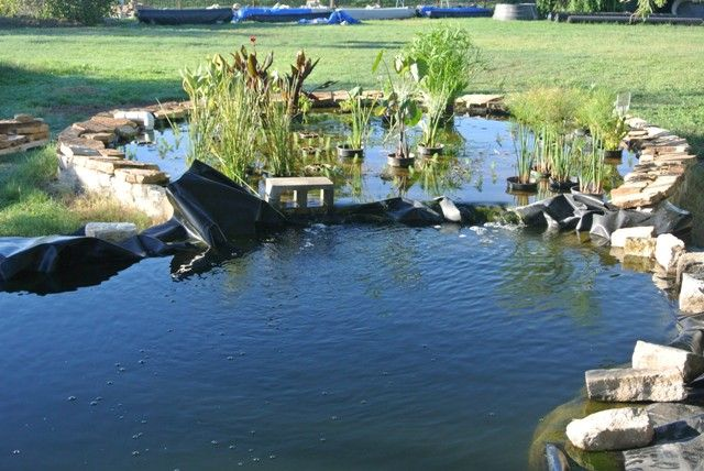 78 images about pond bog filter ideas and designs on for Duck pond water
