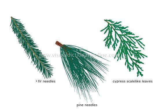 0065242c67e5da2c7e4ba523d62938ce--leaf-images-languages Palmate House Plants on perennial plants, parsnip plants, rosette plants, leafy plants, south west plants, simple plants, parkway plants,