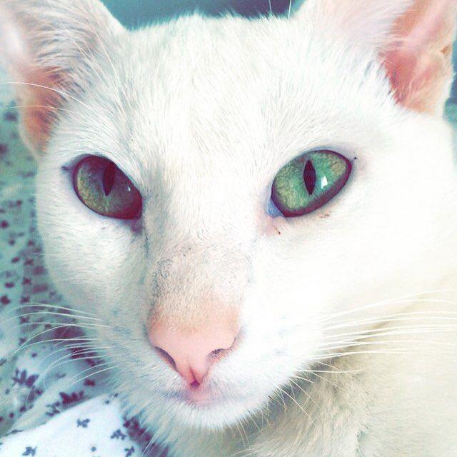 Às vezes os olhinhos dos nossos bichos falam o que gostaríamos de ouvir de algumas pessoas! Meu Jonh Snow me encantando com seu olhar 43 #catsofinstagram #catlovers #adotarétudodebom #jonhsnow #mentemagracorpofino by mentemagracorpofino