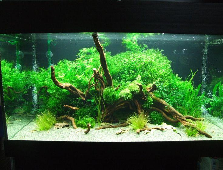 die besten 25 aquarium einrichten ideen auf pinterest aquarium bepflanzen aquarium aquascape. Black Bedroom Furniture Sets. Home Design Ideas