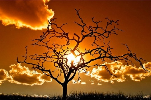 sunset: Trees Silhouette, Desolation Ii, Sunsets, Trees Of Life, Isacgoulart, Beautiful Places, Photo, Branches, Isac Goulart