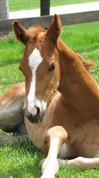 Double L Paint Horse - Sale Horses