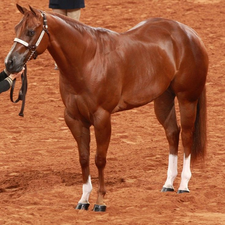 10 Easy DIY Horse Care Tips | Savvy Horsewoman