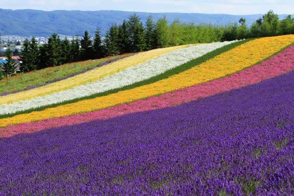 손으로 일궈 만든 10만㎡ 무지개 정원 '팜도미타'