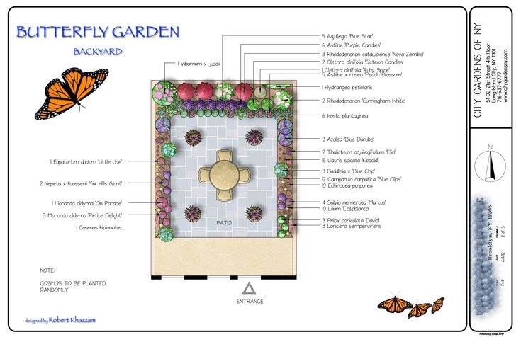 images about GARDEN ATTRACTING BUTTERFLYS FREE TO