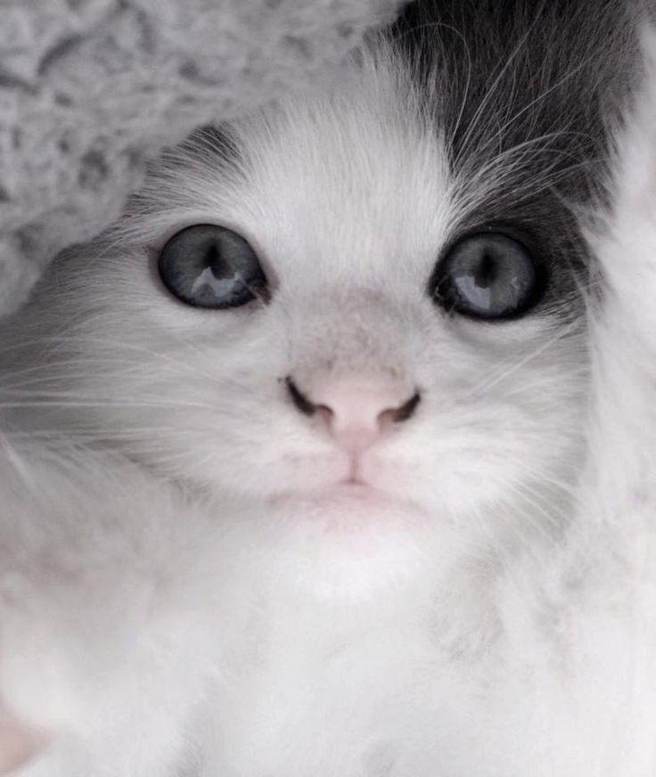 my cute cat : Jules <3