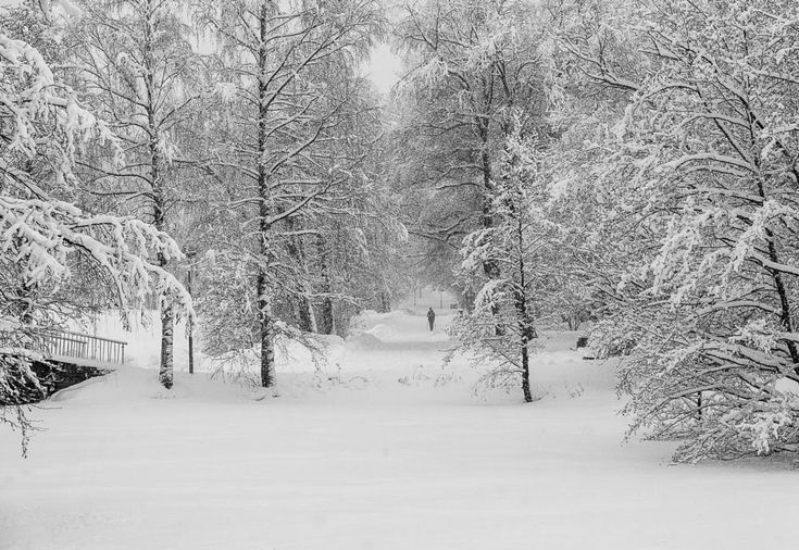 Nordic walking by Petri Forss