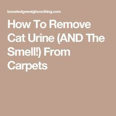 How To Remove Cat Urine (AND The Smell!) From Carpets                                                                                                                                                                                 More